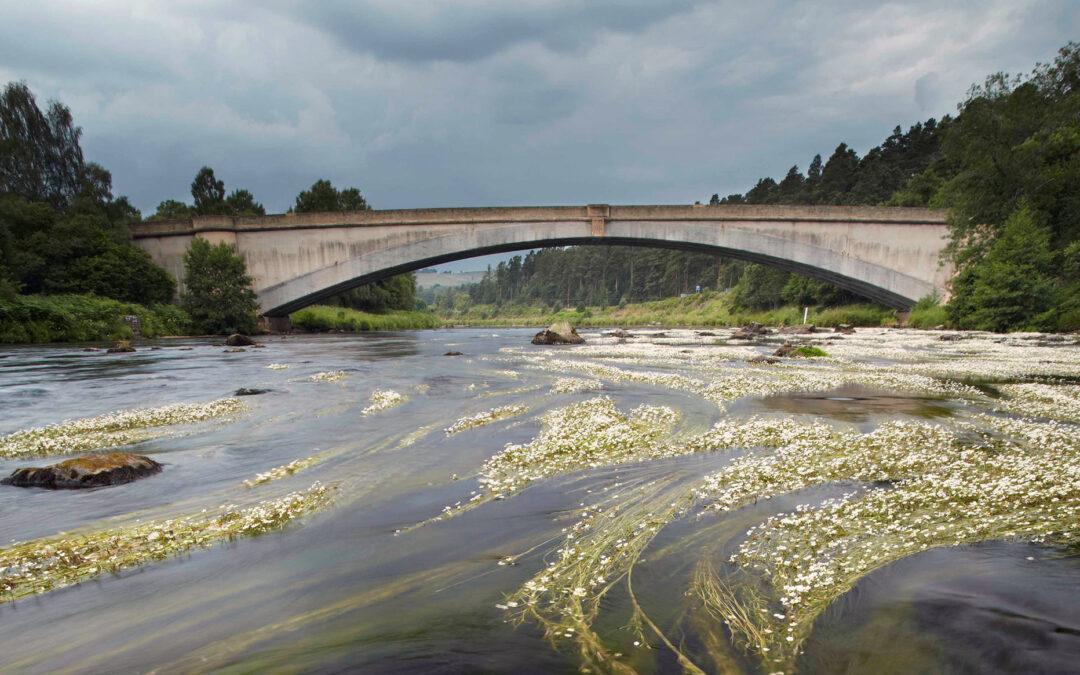 spey-bridge