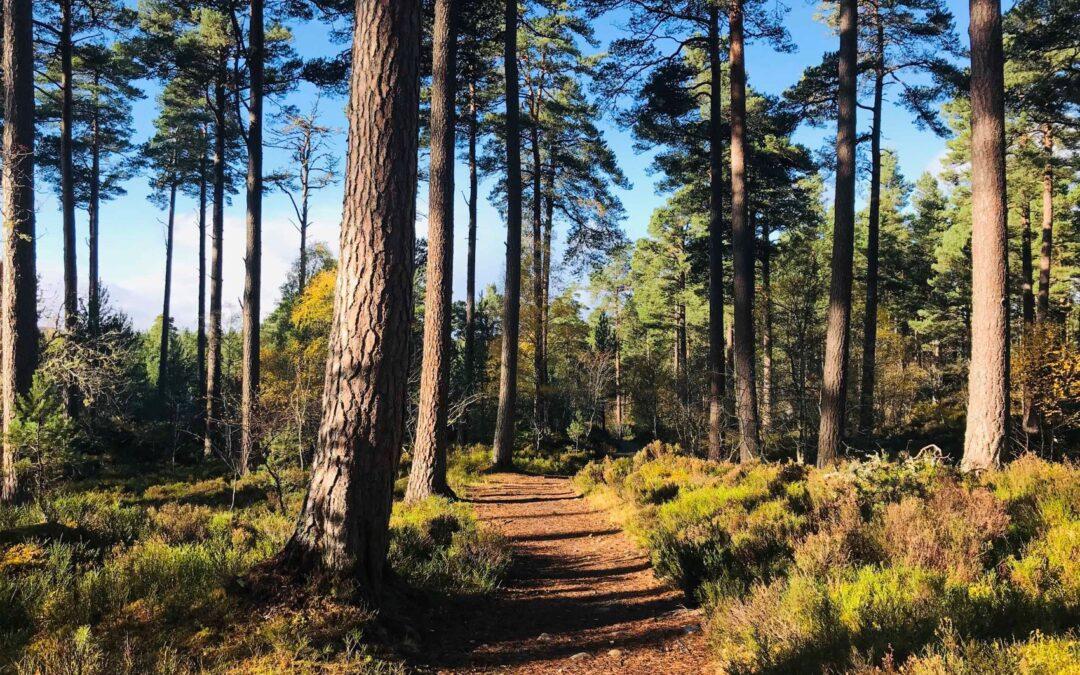 Anagach Woods Trails