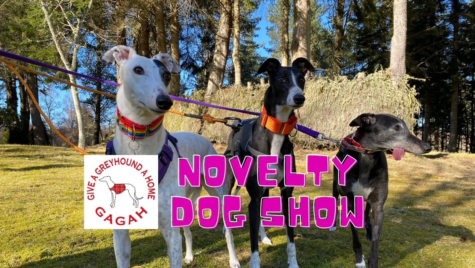 novelty dog show